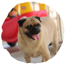 EveryDog Doggy Day Care and Creche in Snodland, Kent