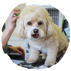 EveryDog Dog Grooming and Spa in Snodland, Kent