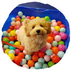 EveryDog Puppy Parties in Snodland, Kent – Saturday Mornings