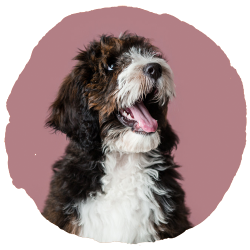EveryDog Dog Photography Portrait Studio in Snodland, Kent