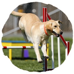 EveryDog Dog Training Courses and Agility in Snodland, Kent