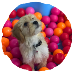 EveryDog-Creche-Kent-Puppy-Party-Button-1
