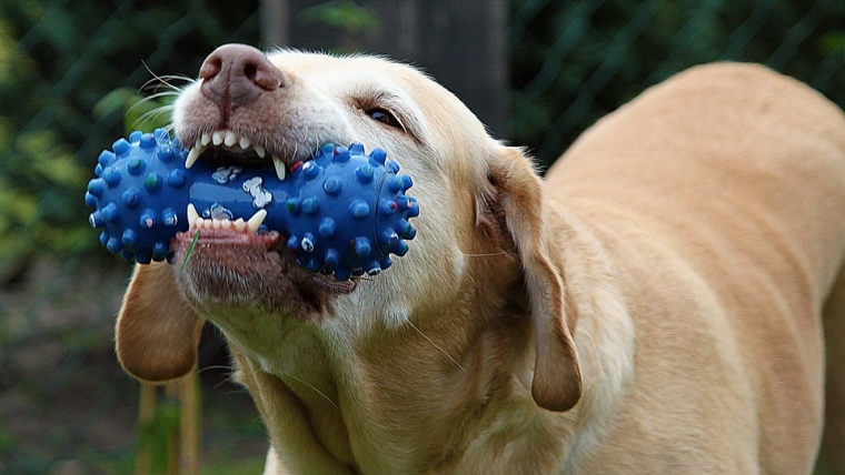 5 Ways to Clean Your Dog's Teeth without Brushing