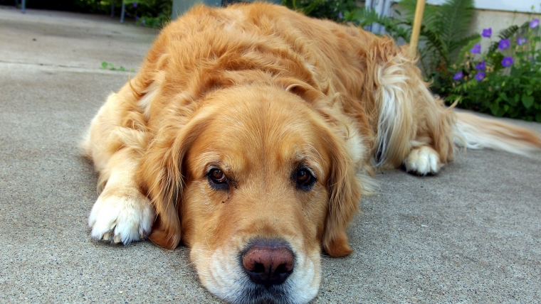 Identifying the Symptoms of Heat Stroke & Dehydration in Dogs